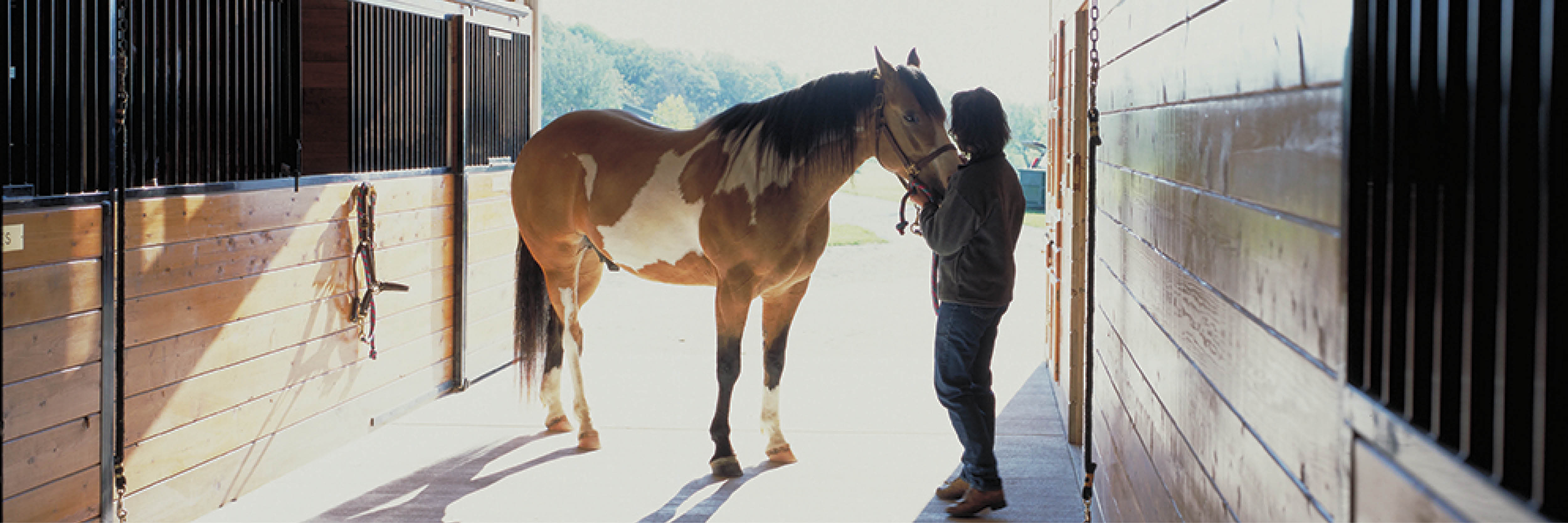 What Are The Most Popular Horse Barn Sizes?